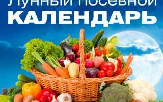 Лунный посевной календарь на 2019 год для садовода и огородника