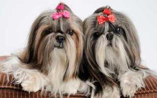 Собаки, которые не линяют и не пахнут