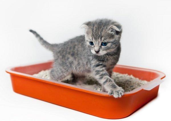 Как приучить кота к лотку на новом месте