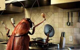 Как избавиться от тараканов в квартире навсегда