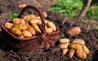Когда сажать картофель в 2020 году по лунному календарю