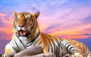 Гороскоп на 2019 год по году рождения Тигра