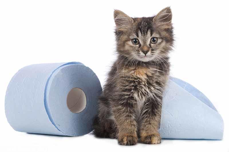 Почему у кошки жидкий стул что делать в домашних условиях причины и лечение