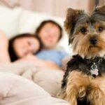 Породы собак для квартиры