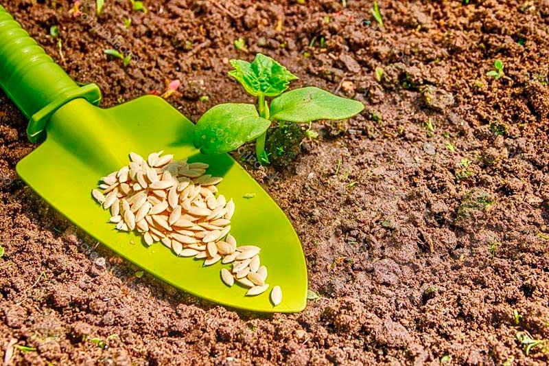 Посадка огурцов на рассаду и в теплицу в 2019 году: календарь, когда садить
